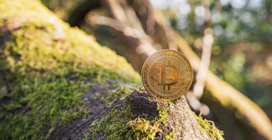 Grafika z monetą Bitcoina na pniu drzewa