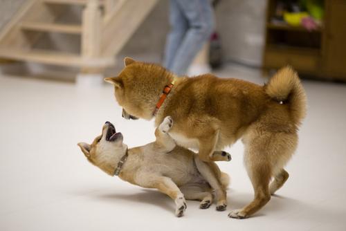 DOGE flips above Shiba Inu again as BTC reclaims $61k